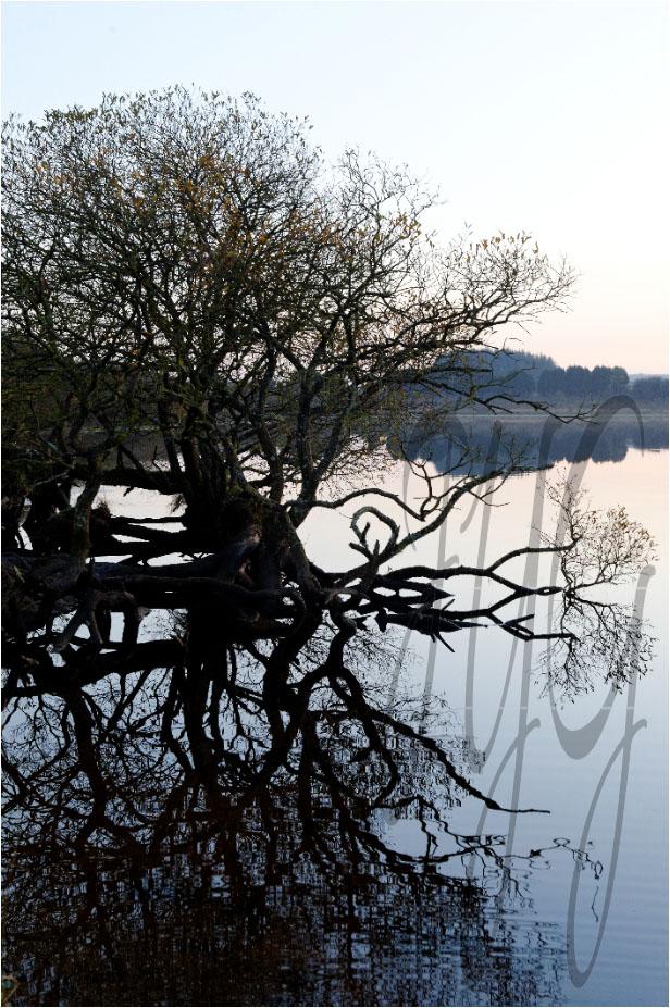 Jean-Yves-Guillaume-photographe-Brest-arbre