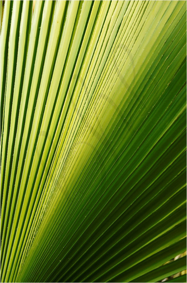 Plante-Jean-Yves-Guillaume-photographe-Brest